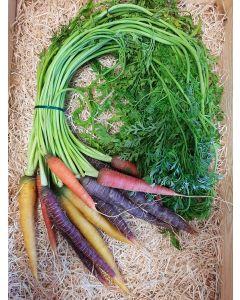 carotte colorée botte (environ 1Kg)