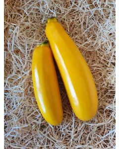 Courgette jaune 10-15cm