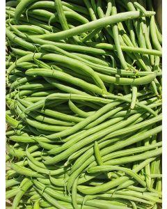 Haricot Vert (fin)
