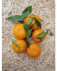 Mandarine tardive à feuille