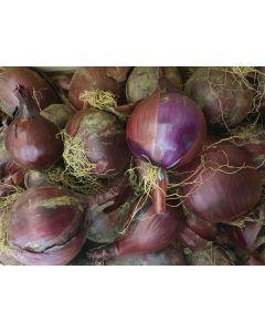 Oignons rouges sec