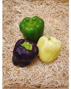 Poivrons multicolores (pourpre, ivoire, vert)