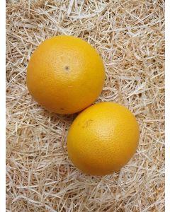 Pomelos de Corse