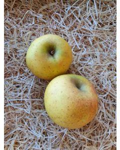 Pomme à compote Antigaspi