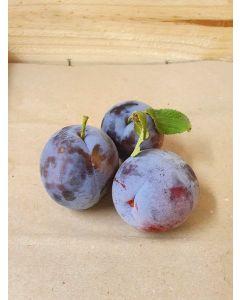 Prune ovale violette