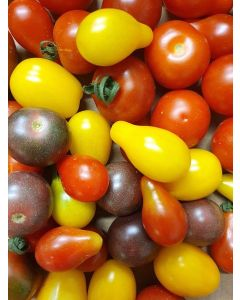 Tomate cerise multicolore 500g