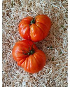 Tomate Cœur de Bœuf Population Conversion
